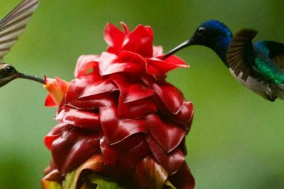 Hummingbirds Float Free of Time